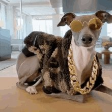 Pet Lover GIF