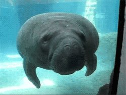watching a Congressional hearing about Ocean-Climate Based Solutions and the talk has turned to manatees and ayñ... don't mess with them, okay? https://t.co/JaG4UhxNXI https://t.co/waewzAPe2Q