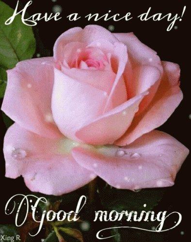 Buongiorno Gerardina