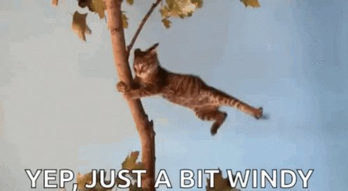 Just ABit Windy Day GIF