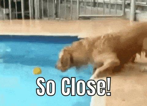 Dog So Close GIF