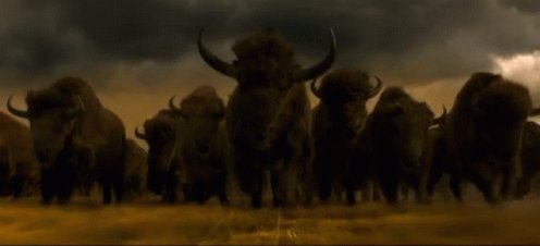 Who's About To Get Some #CryptoBullsToken In A Few Hours?! 🔥🕺🔥🕺🔥🕺🚀 #CryptoBulls #BullsNation #Crypto #cryptocurrencies #fairlaunch @RealCryptoBulls https://t.co/JXsdG0Wk1d