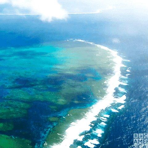 Ocean Wildlife GIF by BBC America