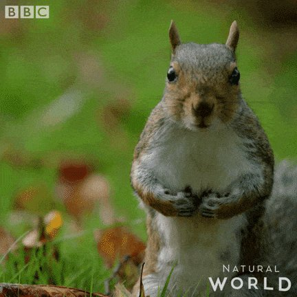 Angry Natural World GIF by ...