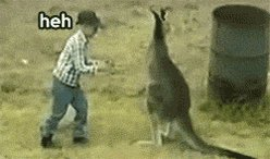 Meanwhile, in #Australia.