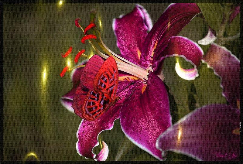 Красивые лилии гифы