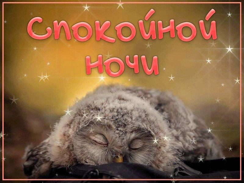 доброй ночи полуночникам картинки