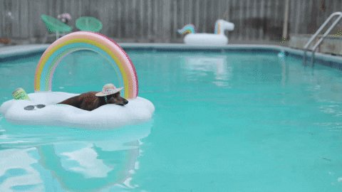@ExtendedStay @SwimWays @DogstersIce The winner's weekend plans #PupParty
