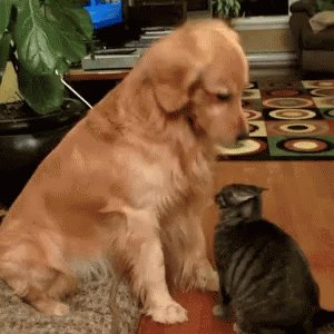 @ExtendedStay A11: I wouldn't mind visiting the grounds of Kitten Academy #PupParty