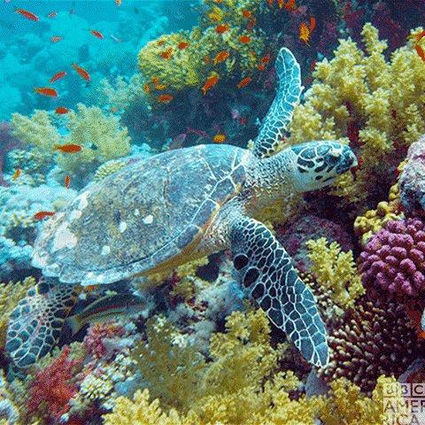 RETWEET if you 💚 sea turtles! 🐢