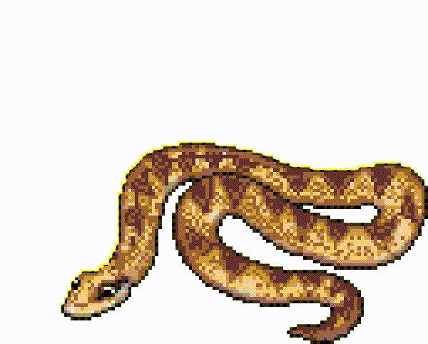 ящерица и змеи гифка гигантские хосты