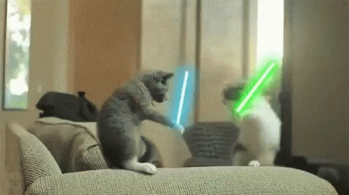 Image for the Tweet beginning: Using reasonable force ? #CatTeachers