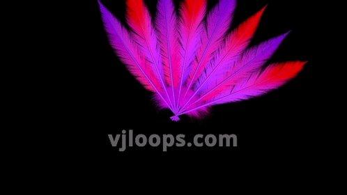 VJLoops com - @VJLoops Twitter Profile and Downloader   Twipu