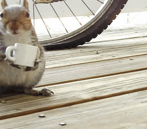 #MyUnpopularOpinionIs now squirrels have a pretty high tolerance for caffeine. ☕️🐿