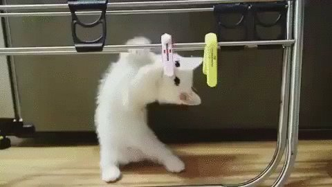 Kitten has important chores to do.🐱🐾😽Have a happy hump day Mukesh! 😊