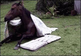 @washingtonpost Who cares as Long as a bunch of assholes make a few bucks right?#AnimalCrossingPocketCamp https://t.co/jRtZi9EKyx