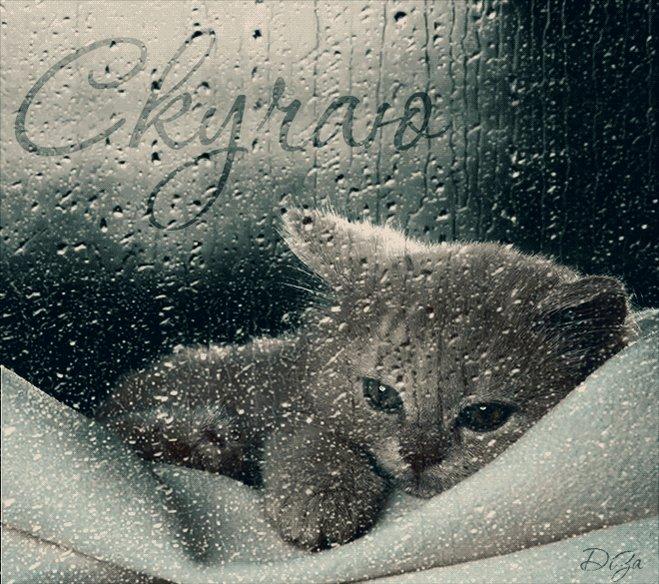 Картинки с котятами я скучаю, рисунки