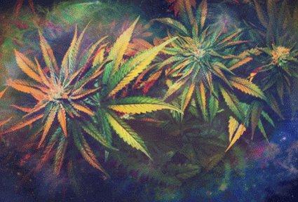 Image for the Tweet beginning: Smoke Weed Everyday 😎  #Marijuana #Cannabis