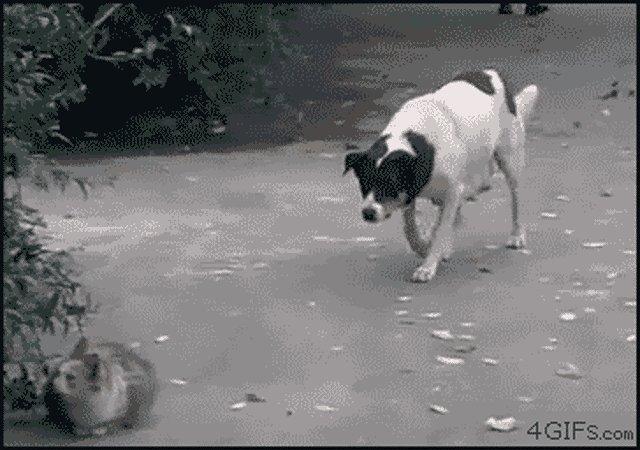 Смешные гифки про животных со звуками, хорошее