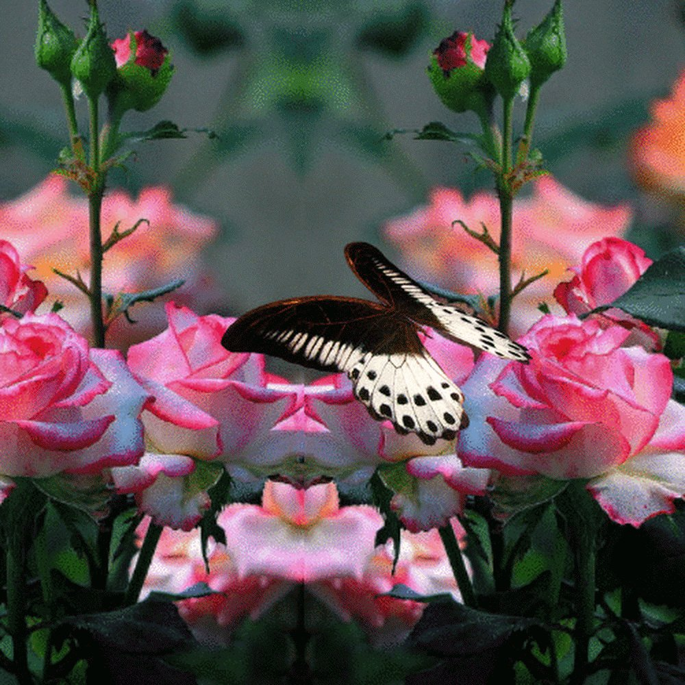 Картинки с анимацией с бабочками на цветах
