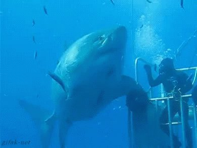 Though I absolutely love my job (teaching high school), my unrealistic dream job would be writing full-time and/or being a shark researcher. All day with the ocean & rows of teeth? Yes, please! #savethesharks #NoFinsNoFuture #WritingCommunity #amwriting #sharkbaithoohaha https://twitter.com/novaren/status/1193205011448246273…pic.twitter.com/2lOFO8D4g5