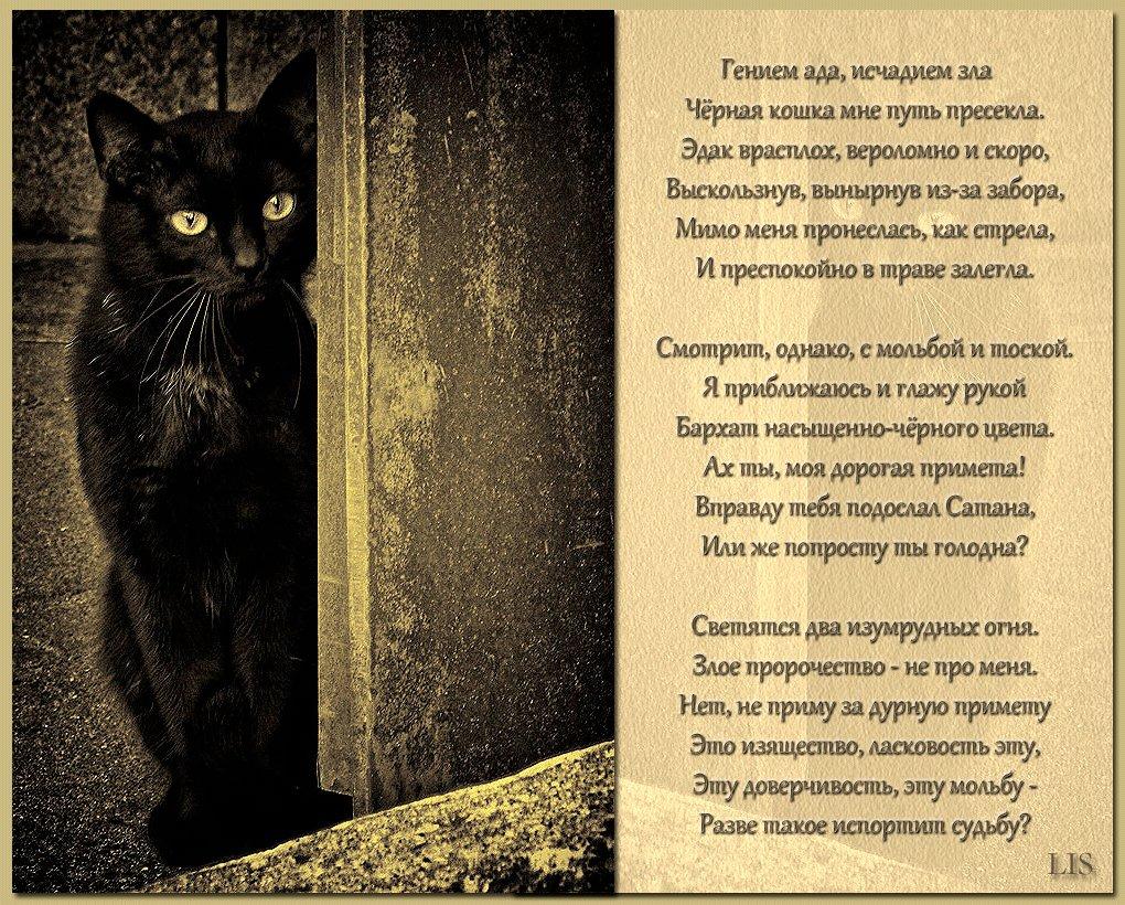 стих про черно белое фото информации стражей
