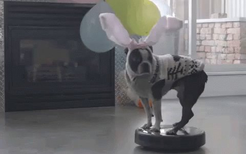 Replying to @fivefortweeting: Roomba 💗 #WeirdGiftsForYourPets