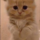 Miaou @myartng ! Voici une superbe image de #chat #cat #cats #kitten #chaton :