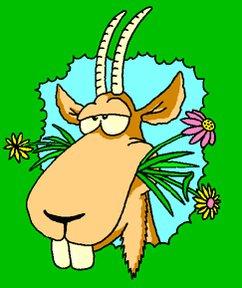 #GoatOfTheDayA septuagenarian man was banished from his Nnewi, Anambra state, community yesterday for impregnating his 20 year-old, mentally impaired daughter 3 times.#morningdrivelagos #GOTD #WednesdayThoughts @nanyaoriginal @Lerinnic @djknightNG