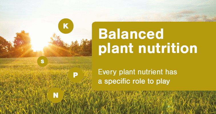 Image for the Tweet beginning: Balanced plant nutrition is a