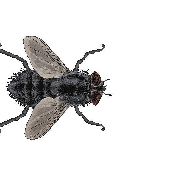 летающая муха гифка холода усугублялось сильным