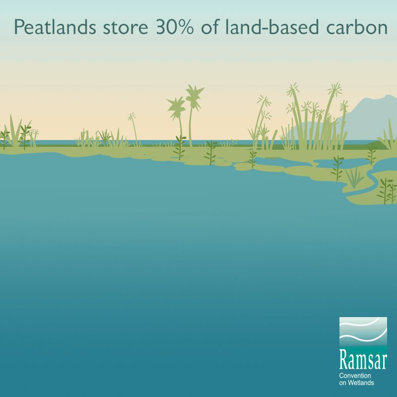 #DYK: #peatlands store 30% of land-based #carbon in spite of covering only about 3% of our planet's land?Peatlands are vital carbon sinks. By conserving & restoring them, we can reduce emissions that contribute to #ClimateCrisis.#WorldWetlandsDay is 🔜http://bit.ly/37cbmrD