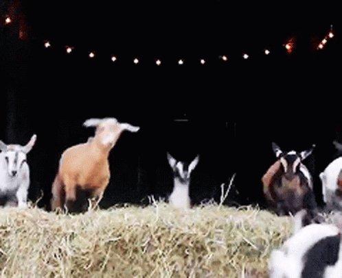 変な時間に寝たから目が冴えてしまったパターン。誰か私の代わりに羊数えてくれへん(  ¯꒳¯ )ᐝ?笑︎︎︎︎︎︎︎︎︎︎︎☑︎ .