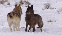 Guten Tag meine Wolfis ich wünsche euch allen einen schönen Sonntag. Genießt ihn den morgen ist wieder Montag. ☆-----------☆ #GutenTag #Badwolfandy #Wolfis #Gaming #Twitter  ☆-----------☆ 😍🐺🎮🐺😍