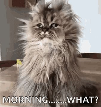 Good morning kids. ☕️🌞 It's Monday. But it's also Presidents Day, so why am I up? Back to bed for me. 🛌 For those who work today (I'm sorry 😐), grab some coffee (okay, lots of coffee) and make this a great day. And when you can and you always can, #BeKind