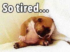 #TodayImFeeling Dog tired!