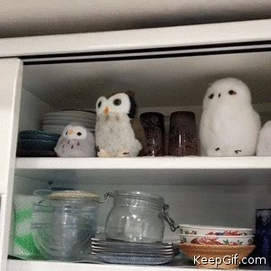 Image for the Tweet beginning: Only Owls on a shelf.😂😏🦉😉😘 Good