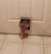 """@Rapunzelchen10 Bei """"Dick machen"""" muss ich immer an diese Katze denken.   Weiterhin gute Genesung!   Schlaf schön! https://t.co/hQBuP4YDr0"""