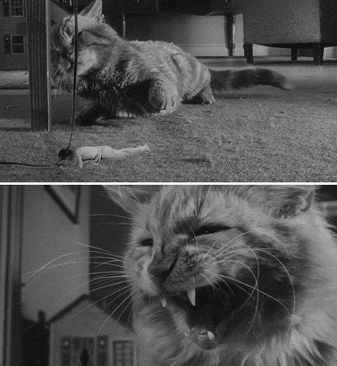 The Incredible Shrinking Man (1957)  #scifi #retrohorrorpic.twitter.com/AoNMeZ1oiF