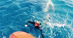 #Jaws. This scene, close your eyes and it is still there. pic.twitter.com/GSGxqlAYCs