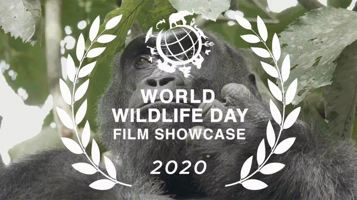Image for the Tweet beginning: Finalists announced for #WorldWildlifeDay film