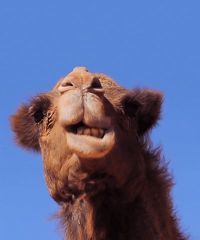 @Yara_Haridy @Mammals_Suck That would be the (totally majestic) camel!