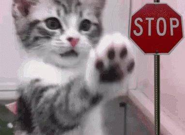 """""""Chuck STOP"""" quit kitten #NBA  #TNT  @NBAonTNT"""