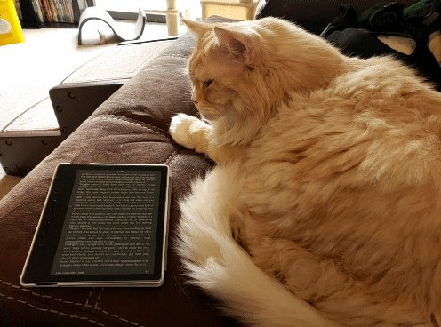 I have learned to make gifs.   Well. I haven't put words to them but still. This is a game changer.  Anywho...  When reading books with witches, cat buddy readers are essential. #CatsOnTwitter #Reading