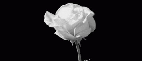 @LSD122070 so sorry for your loss. you are not alone, please stay strong and be well.