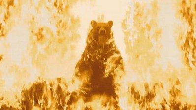 Bye bye bear!!! #2020MMM