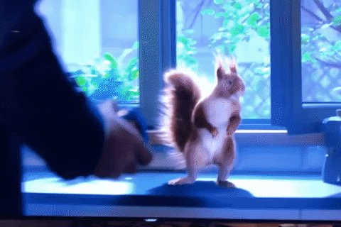 Nobody's out feeding squirrels in city parks now. Time for a spot indoor #SquirrelTax audit.