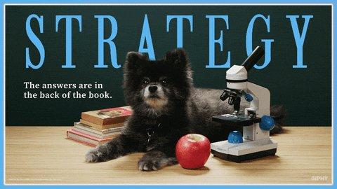 strategic #pomeranian #pets #dogstagram pic.twitter.com/fCwjjbUOdk