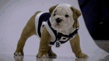 @ButlerBethanie What Butler Blue in a sweater? Double as good?
