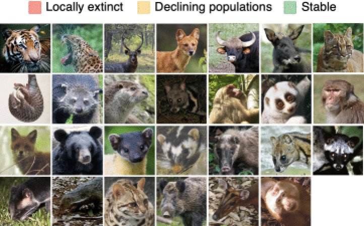 In our new @AnimalConserv paper, we combined #cameratraps, local ecological knowledge and Bayesian models to show that ongoing hunting practices and expanding rubber plantations can decimate populations all med-large sized mammal species. (1/6) doi.org/10.1111/acv.12…